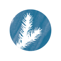 sapin-bleu-foret-communication-environnement-consultation