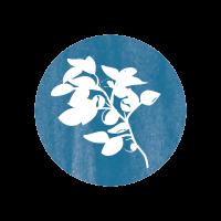 Bleuet-bleu-foret-communication-environnement